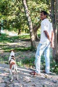 Hund und Herrchen schauen dem Echsenkampf oben im Baum zu