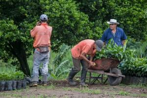 Plantagenarbeiter