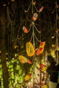 Pflanzen auf der Kaffeeplantage