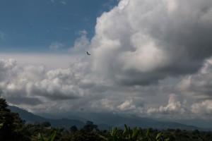 Geier unter den Wolken