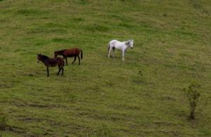 Pferde in Solento