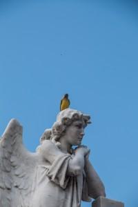Mompox - Vogel auf einem Engelskopf