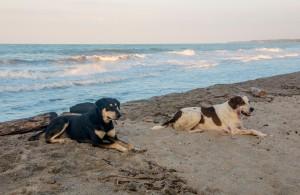 Hunde am Palomino Strand