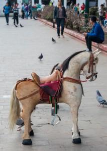 Popayán - Pferdchen