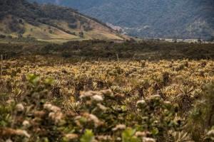 Fahrt von San Augustin nach Popayán auf einer Piste - nach dem dichten Wald geht es über weite Felder