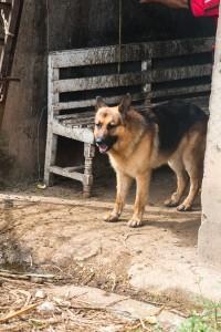 San Augustin - Wachhund
