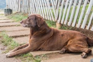San Augustin - Archäologischer Park - Hund