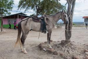 Tatacoa Wüste - Pferdeparkplatz
