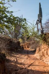 Tatacoa Wüste - Weg