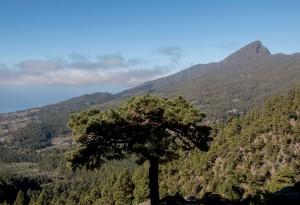 Ermita Virgen del Pino - durch Kieferwälder geht es bergauf