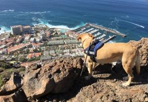 Lasko blickt über die Klippen