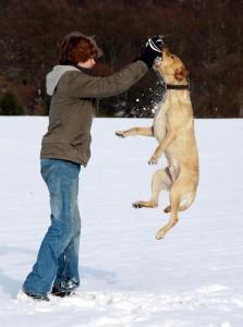 Lasko verspielt im Schnee