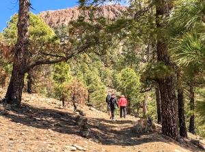 Wandern durch Kiefernwälder