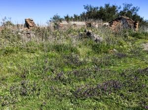 Blühende Wiese und Ruinen