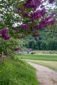 Wacholderblüte