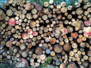 Buntes Holz mit geheimnisvollen Nachrichten :-)