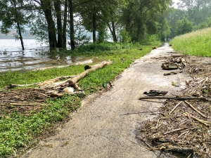 Rheinufer, Radweg und viel Holz