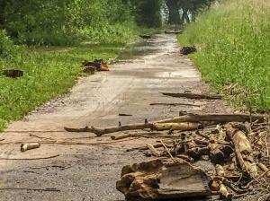Treibholz und Wasser auf dem Rheinuferweg