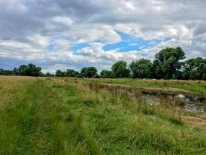 Wolkenspiel über sumpfigen Rheinwiesen