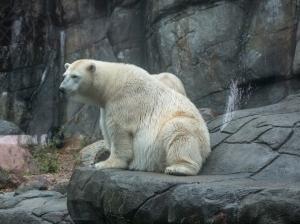Ich möchte ein Eisbär sein...