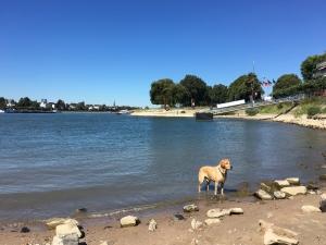 Lasko am Rhein