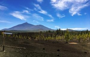 Teide, Kiefernwälder und Vulkanschlacke